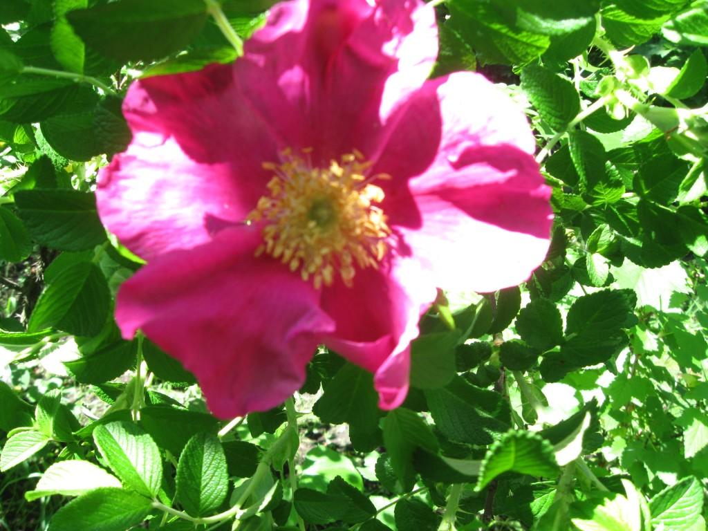 эстафета фото цветов